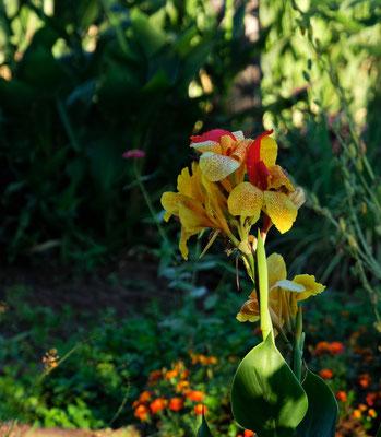 ...aber auch wunderschöne Blumen