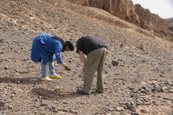 Schau mal da liegen die Fossilien rum