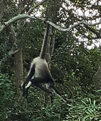 zur Insel mit den turnenden Affen....