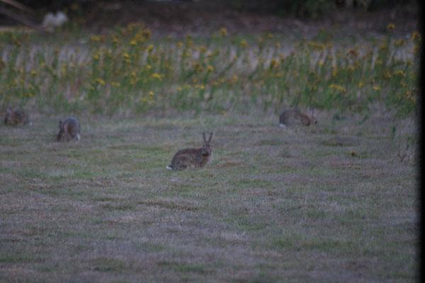 Die Kaninchen bieten uns ein Unterhaltungsprogramm