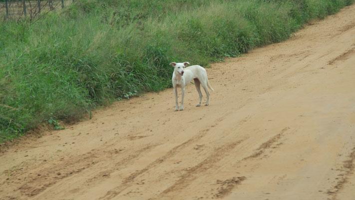 """Das ist eines der """" wilden"""" Tiere die wir auf der ganzen Strecke zu sehen  bekommen."""