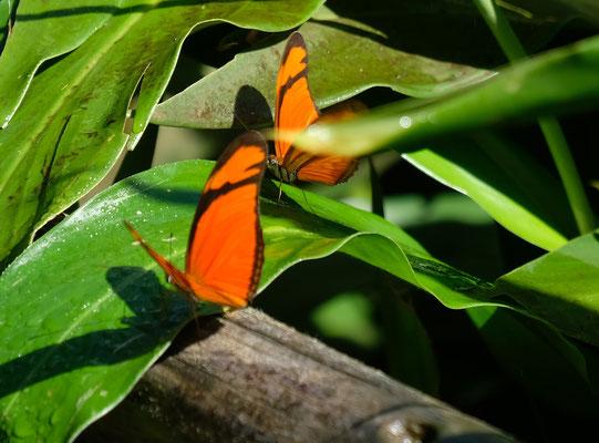Schmetterlinge in allen Farben.