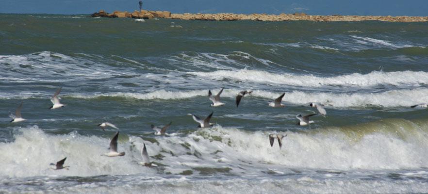 ... doch das Meer ziemlich bewegt.