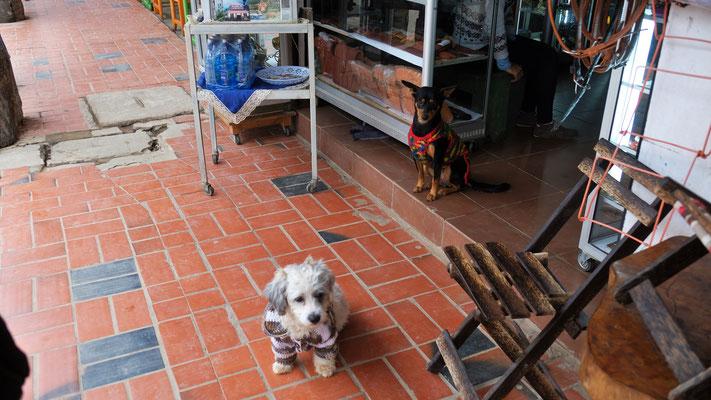 sogar die Hunde tragen wärmende Kleidung in Rurrenabaque