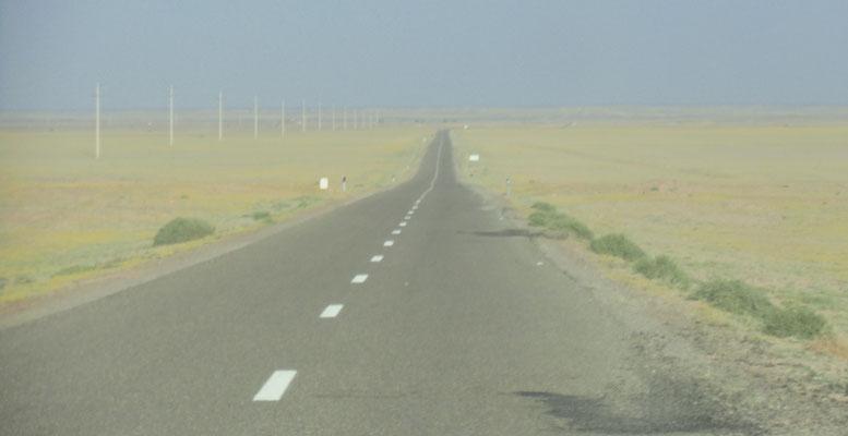 Grün und gelbblühend die Westsahara