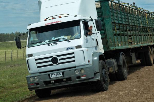 Wohin geht es wohl mit den Schafen? Eines der zwei Fahrzeuge die uns hier begegnen.
