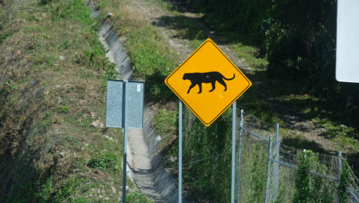 ... sehen Jaguare..