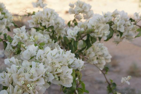 Blüten werden gehegt und gepflegt