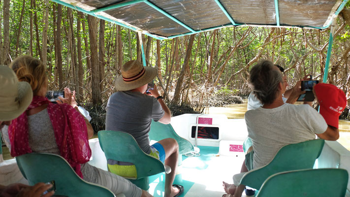 Rein in die Mangroven....