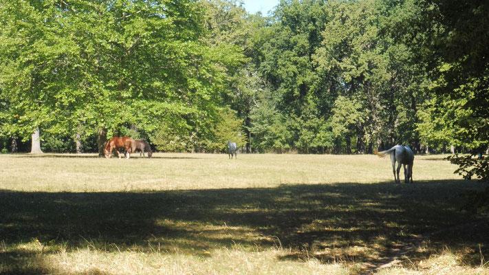 Die Pferde äsen friedlich im Park