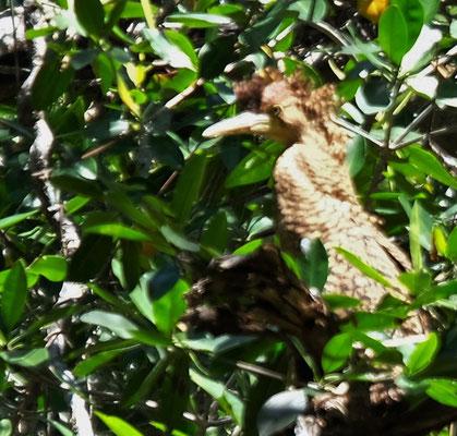 Entdecken dafür mit unserem Führer eine ganz spezielle Gattung, die hier ihr Nest hat.