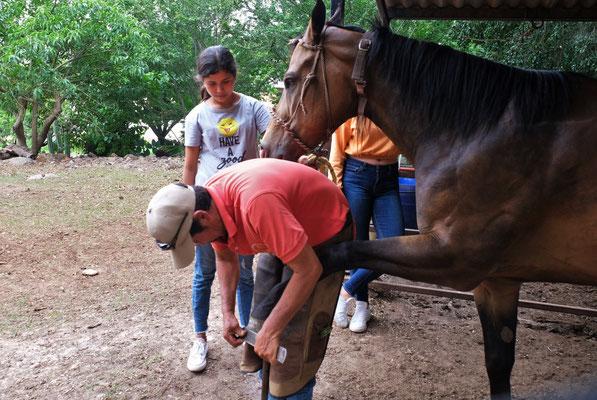 Die Hauseigenen Pferde bekommen ihre monatliche Pedicure