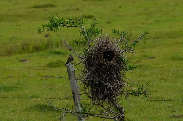 Wozu braucht das kleine Vögelchen so ein grosses Nest?