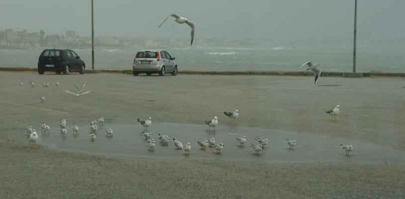 Die Möwen lassen sich von Sturm und Regen nicht beeindrucken
