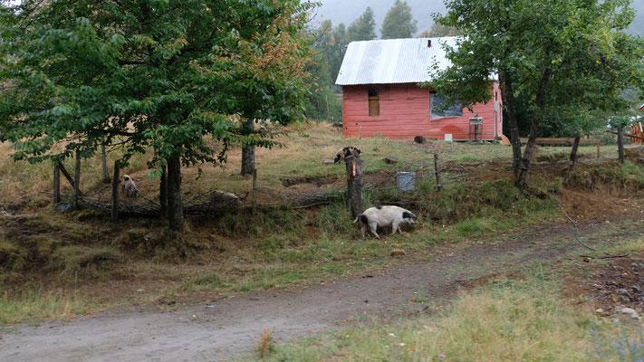 ....rein ins sehr stark bewohnte Tal der Mapuche