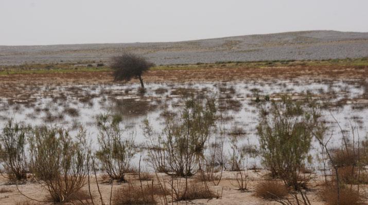 Der Rest des Riesensees im Oued  bei Esmara