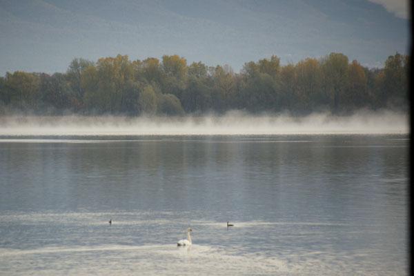 Das Wasser dampft in Arona am Lago Maggiore