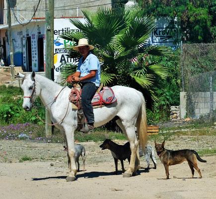 Cowboy mit seinen Hunden