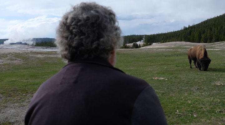 Wir sehen unser erstes Bison im Yellowstone Nationalpark...