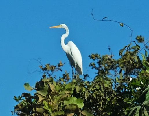Nur selten sehen wir vor lauter Staub einen Vogel in den Bäumen