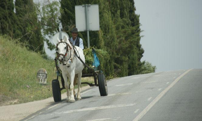 Ein Bauer im Alentejo mit Pferdefuhrwerk