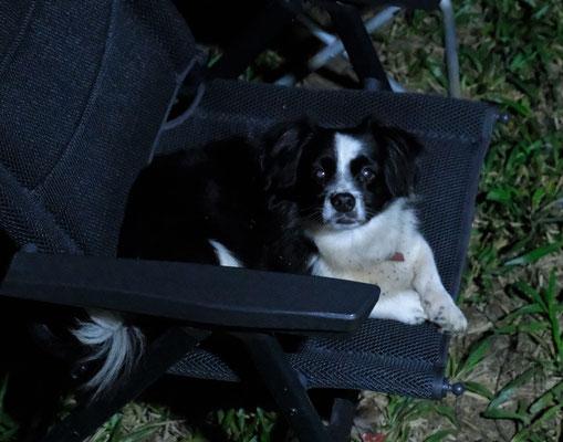 Der kleine Auswanderer auf dem Campingplatz sucht sich den besten Schlafplatz auf unserem Stuhl