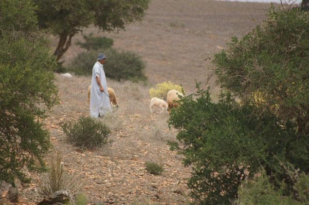 Er hat sich sehr beeilt uns mit seinen Schafen für eine Zigarette zu erreichen