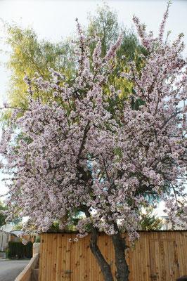 Der Frühling in voller Blüte