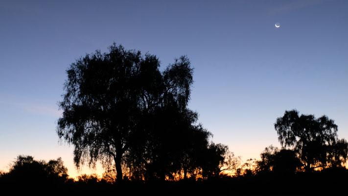 Ein letzter Sonnenuntergang und Mondaufgang in Rosaleda