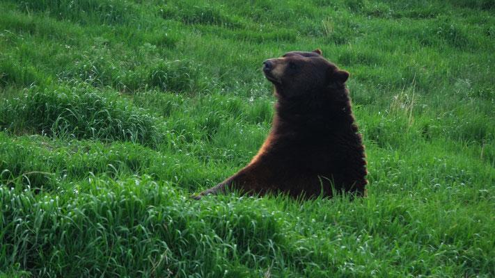 und Bären hautnah....