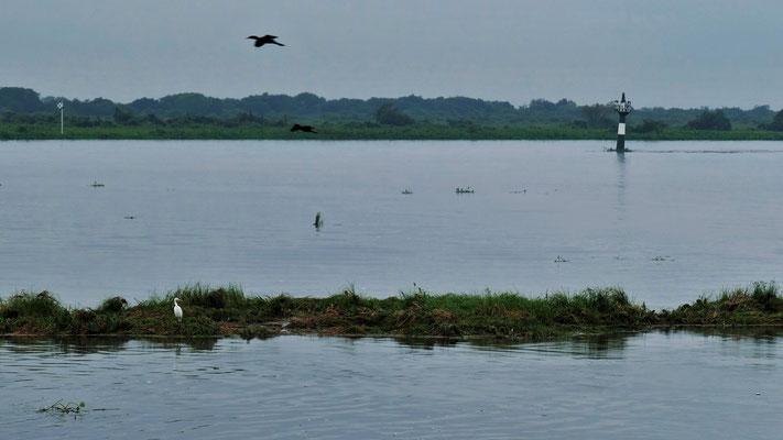 Die schwimmenden Inseln dienen den Vögel als Taxis.