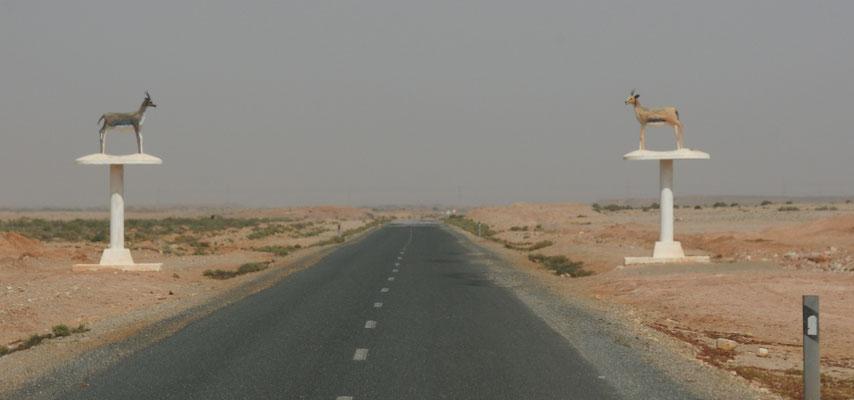 Raus aus der Westsahara