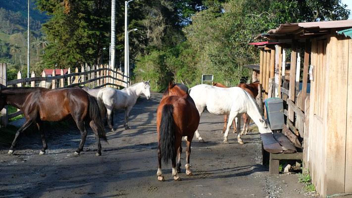 """Die Pferde sind von ganz alleine von der Weide gekommen und da muss ich """" Schisshas"""" jetzt durch."""