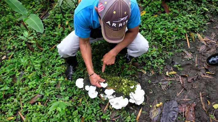 kriegen die Pilze erklärt