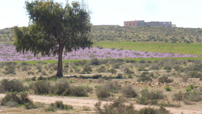 Violette Blütenpracht