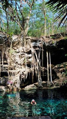 Hier in diese Cenote stimmt für uns alles und.....