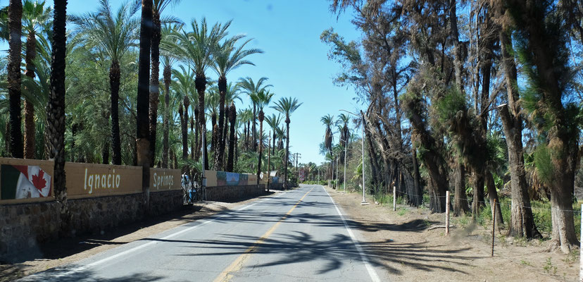 Wir erreichen die Oasenstadt San Ignacio...