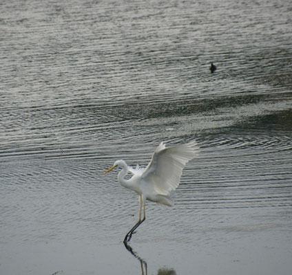 Ein Reiher im Salzwassersee