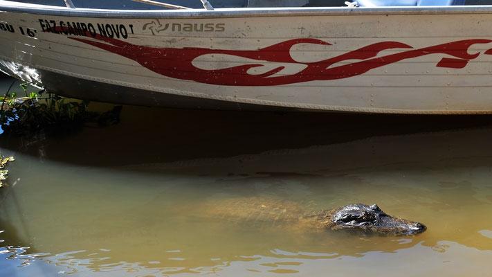 Hier ist das Baden verboten. Auch wegen den Piranhas