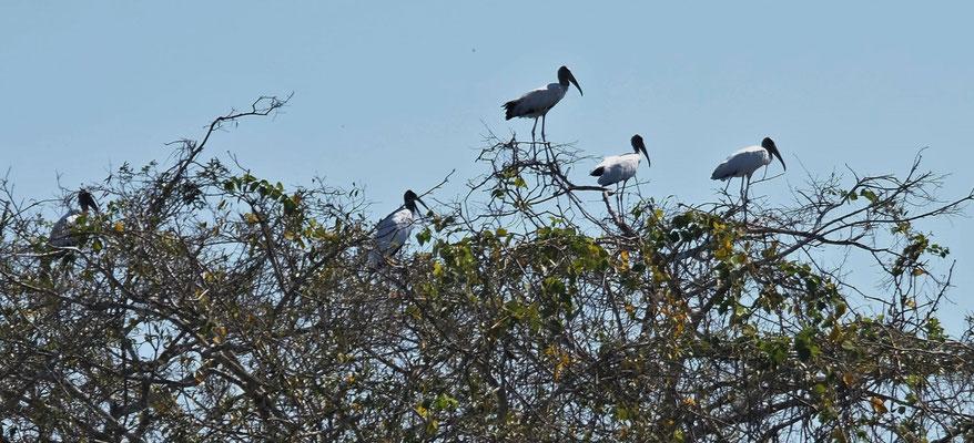Tschüss Wahrzeichen des Pantanal