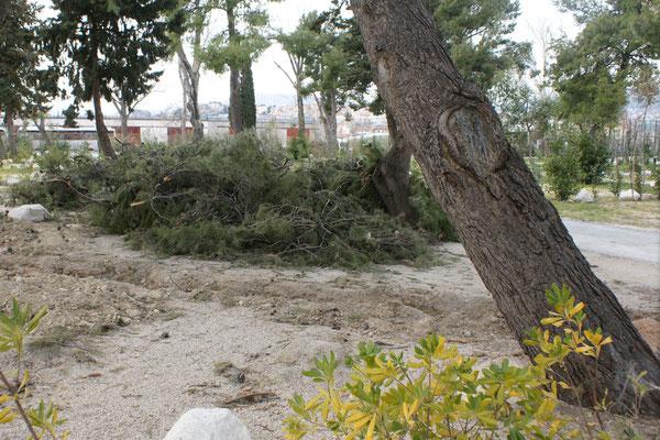 Viel Holz vom Sturm liegt am Boden.