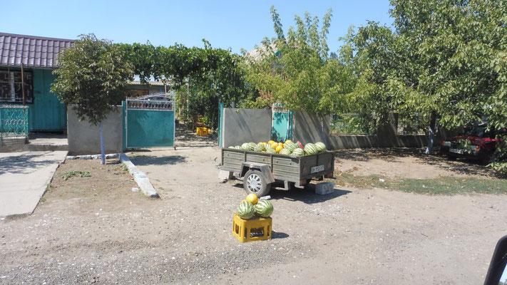 Wer will nochmal, wer hat noch nicht. Melonen im ukrainischen Donaudelta