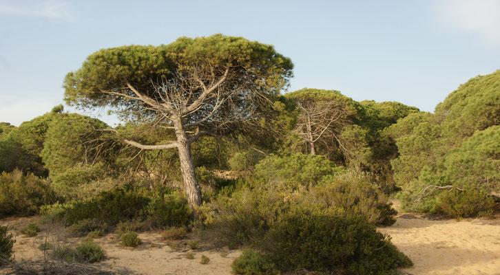 Die Form und Farbe bilden der Wind und das Salz im Nationalpark Donana