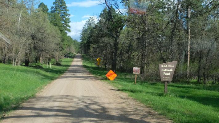 Wir sind mitten drin im Black Hills Forest.