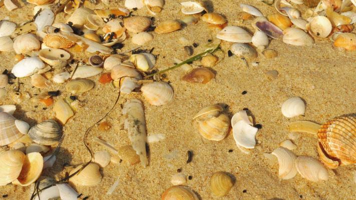 Der ganze Strand ist voll, ich kann nicht widerstehen und ....