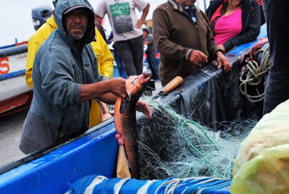 ..bestaunen die Fänge der Fischer...