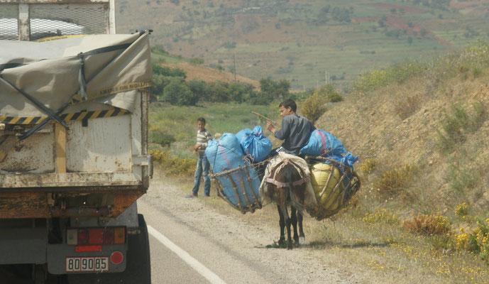 Schwer bepackter Esel im Rifgebirge