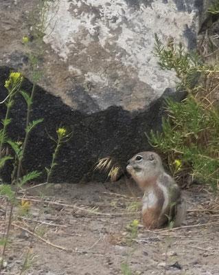 ... wo uns zuerst die Streifenhörnchen begrüssen....