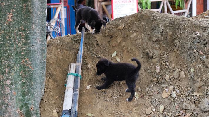 Einige Hunde sind sehr bedrohlich, diese zwei weniger