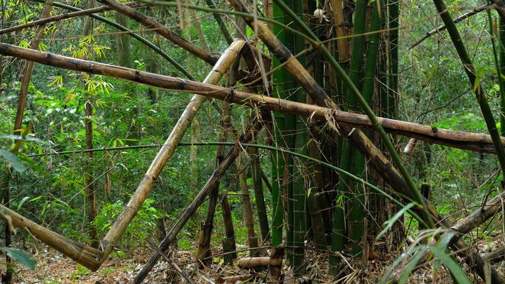 Während einer trockenerer Phase durchstöbere ich den Urwald hinter dem Stellplatz